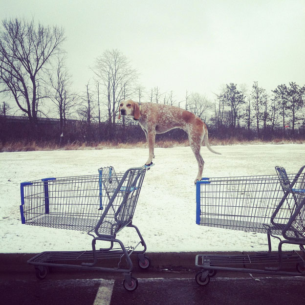 Maddie on Shopping Carts