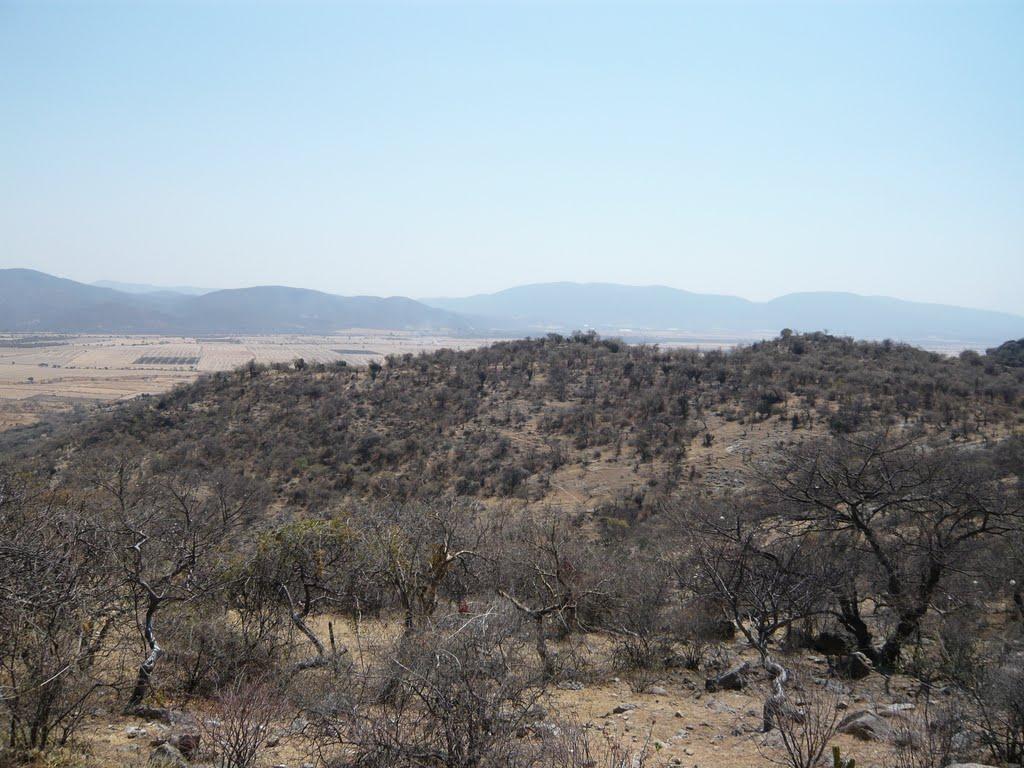 Selva Seca