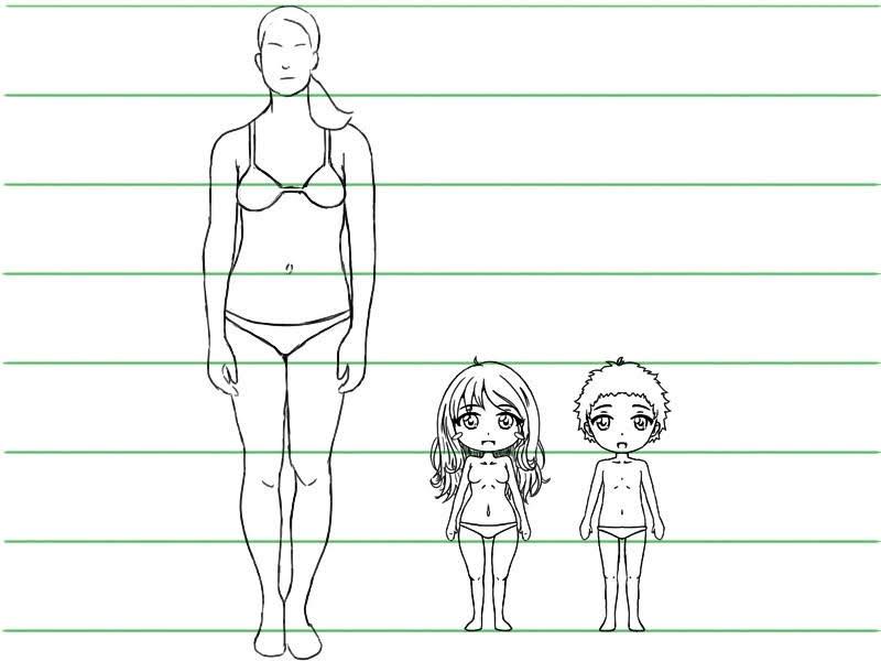 Comparaison des proportions entre un humain réel et des personnages chibis