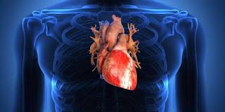 Organ Tubuh yang Terganggu jika Sirkulasi Darah Buruk