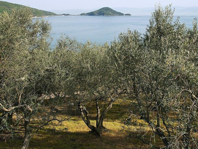 Shodoshima - Isola degli Olivi