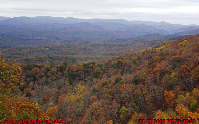 Georgia's Beautiful Fall Colors in Amicalola