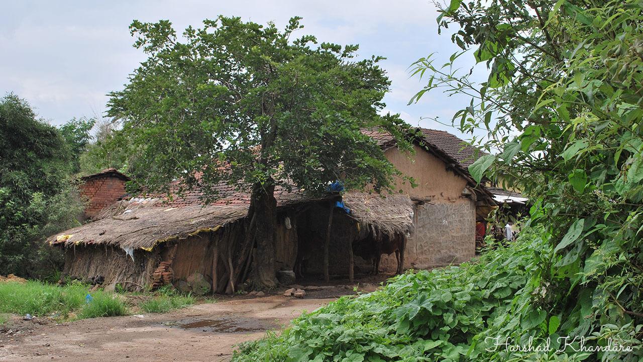 गर्द झाडीतली घरे