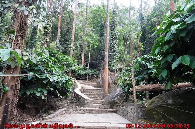 Edakkal Caves near Wayanad Kerala