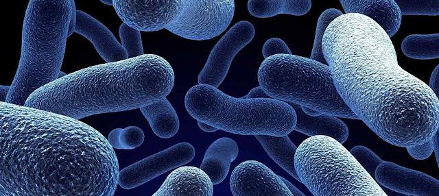 Celular procariotas y bacterias