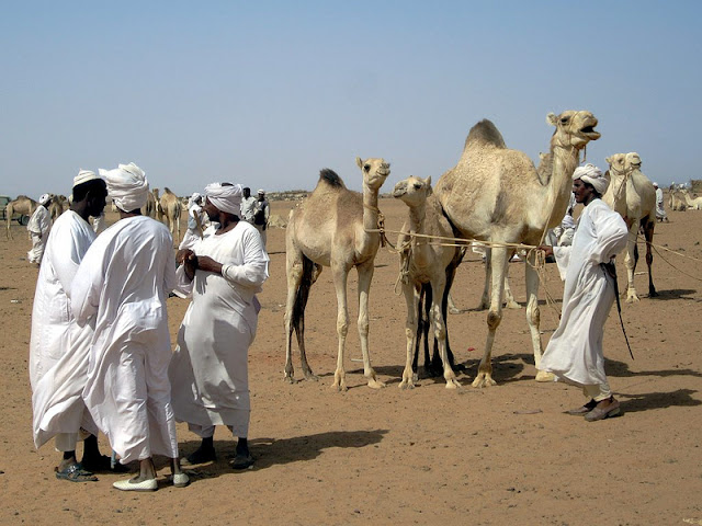 Herders at the camel market on the far west side of Omdurman, Sudan.