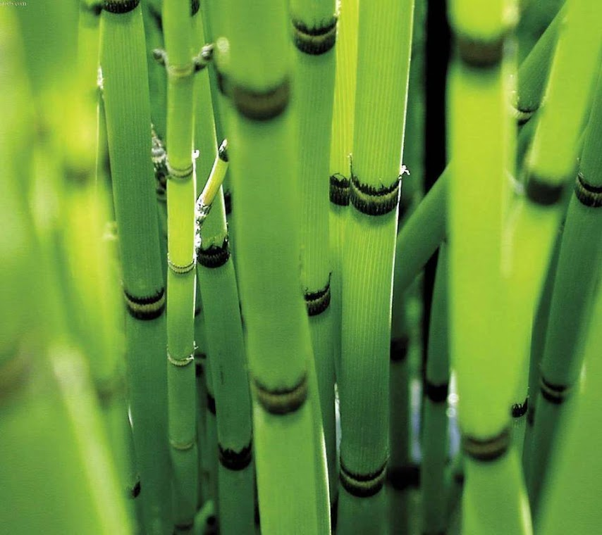 Bamboo Macro HD Wallpaper for Mobile Phone