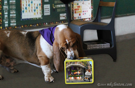 "Bentley Basset Hound sniffing a ""The Returns"" lunchbox in a classroom setting"