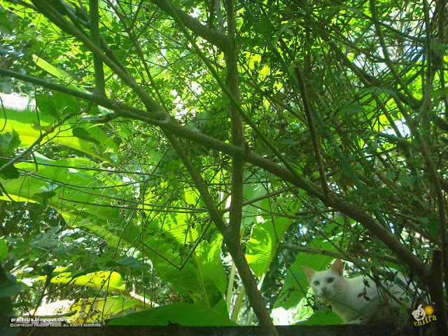 White tabby cat in greenery - Simply love hanging around the foliage