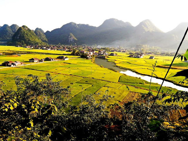 Experience exploring the ripe rice season in Bac Son