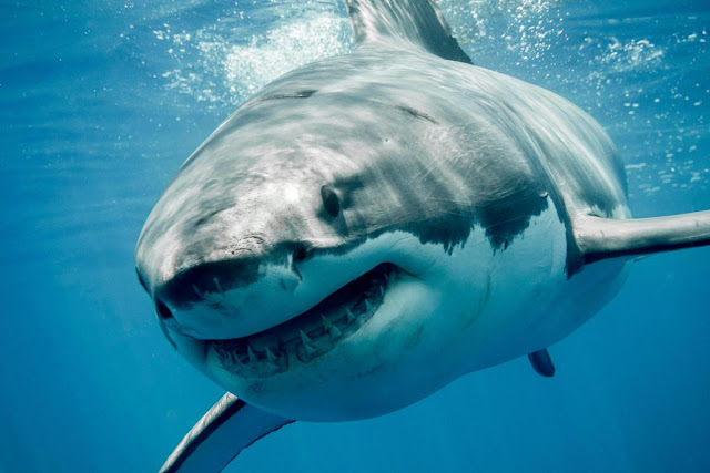 Shark In Hindi Interesting Shark Facts