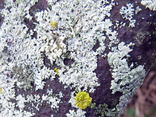lichen on metal wheel