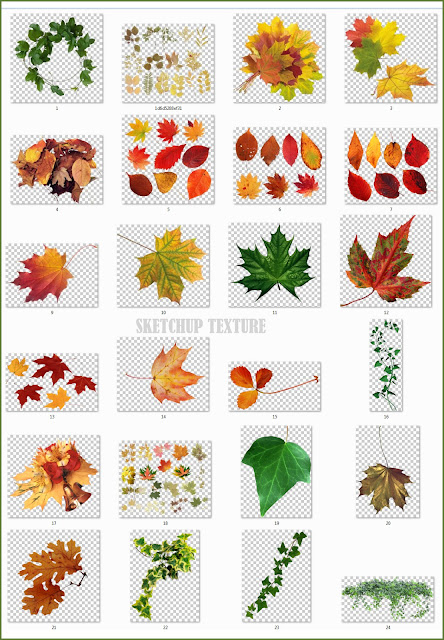leaves png collection #1