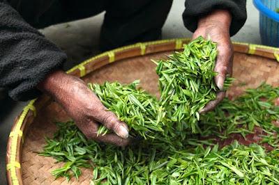 Cara menghilangkan flek hitam pada kulit dengan Ekstrak teh