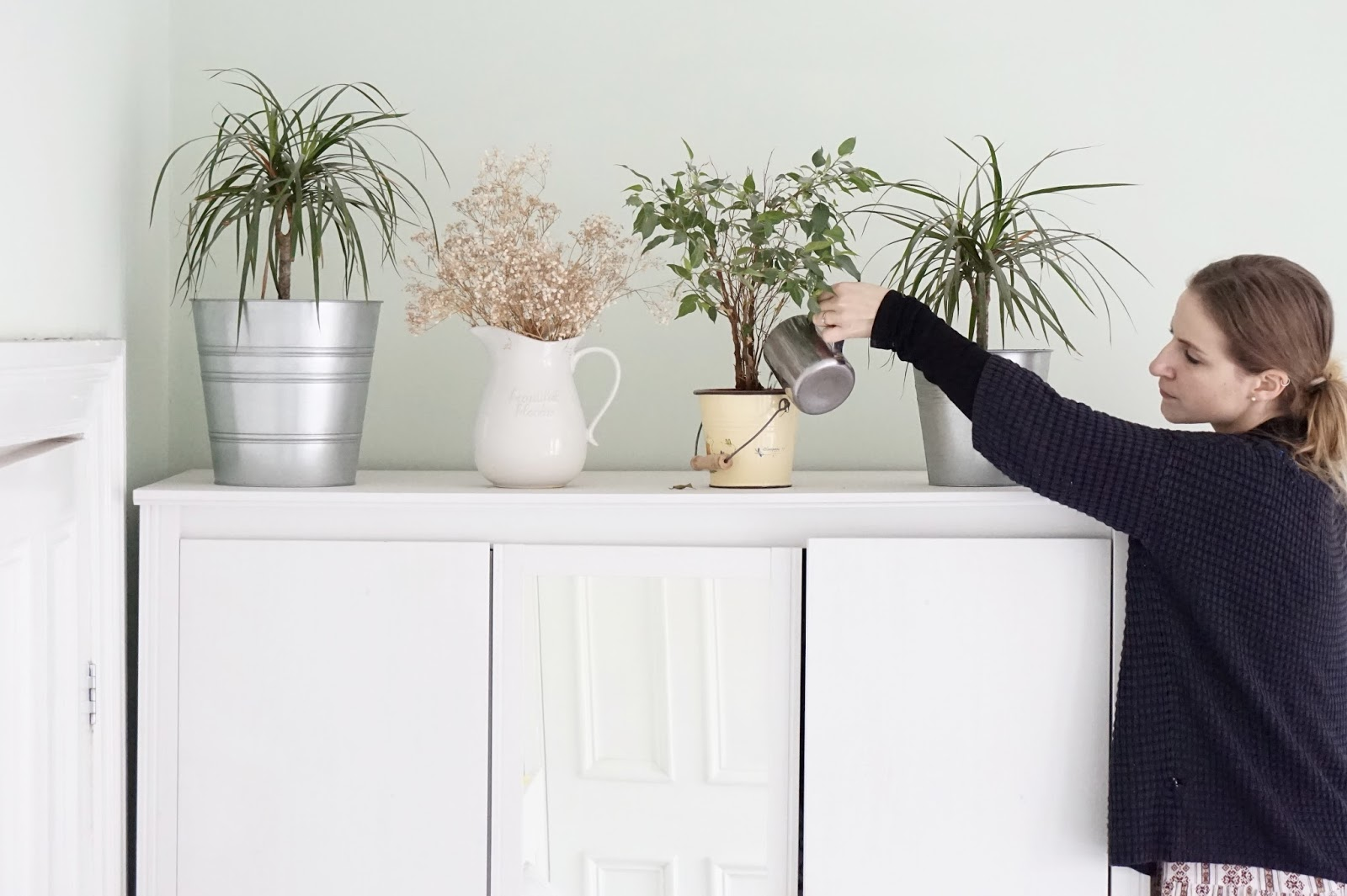 Adding Plants To Your Home