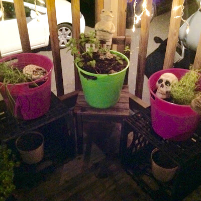 Herbal Container Garden in Buckets from Dollar Tree Re-purposed as Garden Containers