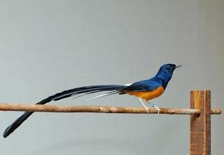 Daftar-harga-jenis-burung-murai-batu-terbaru-2019