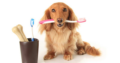 Brush Up On Your Dog's Dental Health