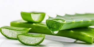 You Must know the benefits and side effects of Aloe Vera - Healthy T1ps
