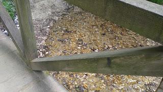 imagine de peste un pod, apa de sub părea gălbuie de departe, de aproape părea altceva - fotografia îmi aparține