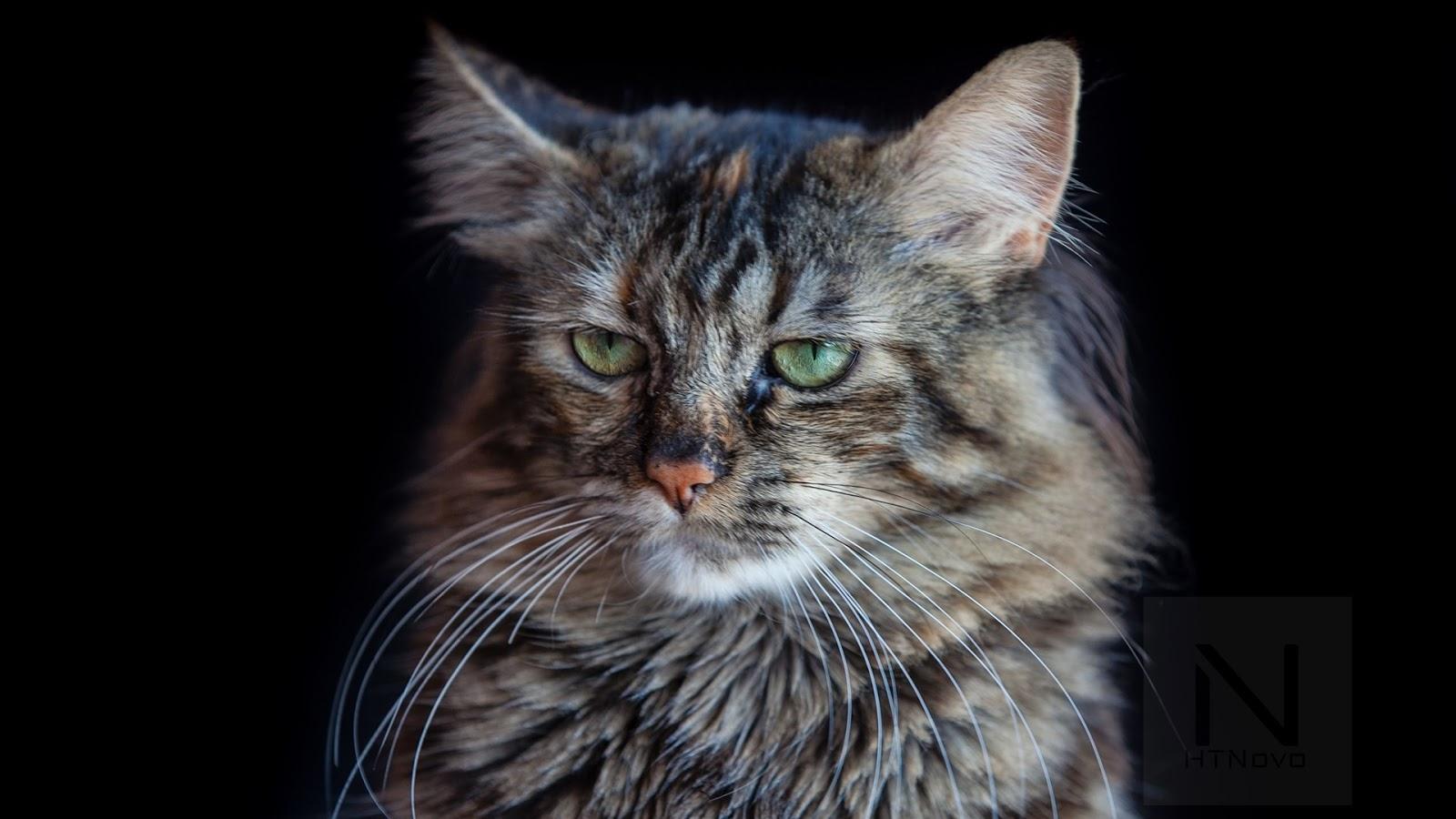 Cat-Expressions-Tema