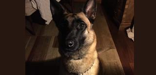 Η ΕΛ.ΑΣ. αποχαιρετά τον αστυνομικό σκύλο της Κ9 ANUK: «Δεν θα σε ξεχάσουμε»