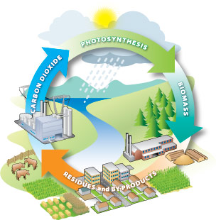 biomass cycle - photo #12