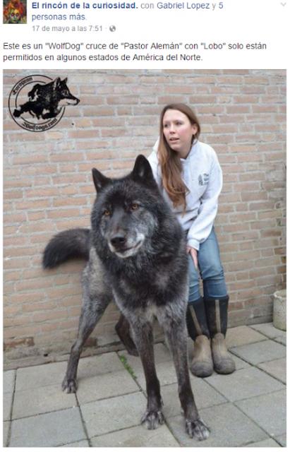 20 memes del Chilaquil y su historia: el perro más feo