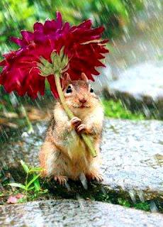 hujan sumber kehidupan dan rahmat ilahi