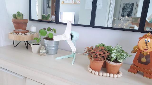cactus-pilea-plantes-chez-woody-beauty
