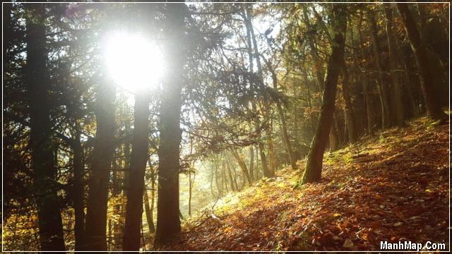 ánh dương chiếu sáng vào rừng thu