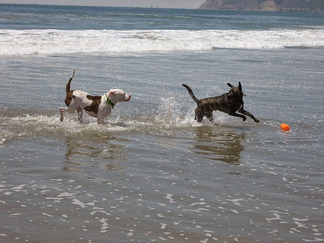 Dogs Running In The Sea