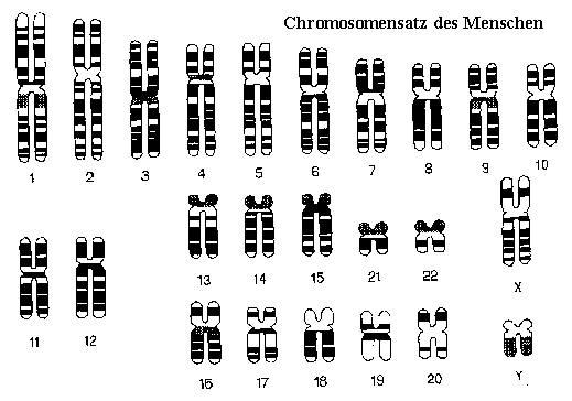 Gene Des Menschen