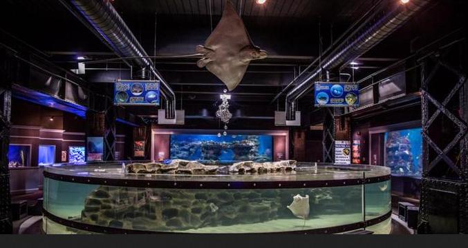 Greater Cleveland Aquarium Wedding Venue