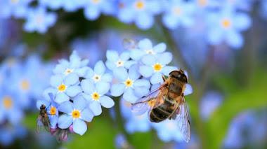 'SOS polinizadores' y las flores favoritas de abejas y abejorros