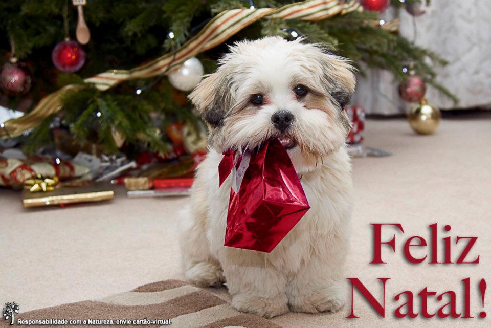 Resultado de imagem para imagens de feliz natal com animais