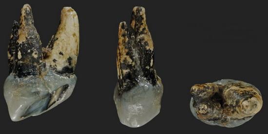 LaporanPenelitian.com Graecopithecus dari Eropa Sebagai Hominid Paling Awal