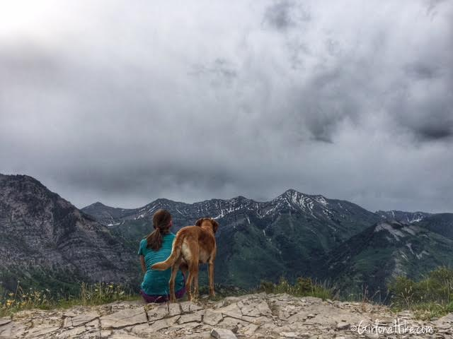Buffalo Peak, Utah, Hiking in Utah with Dogs