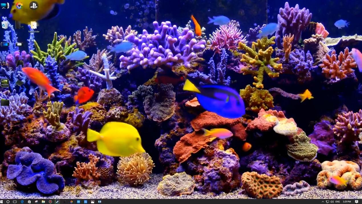 Anime 4k Wallpaper: THE BEST 4K Aquarium Wallpaper Engine Free Download