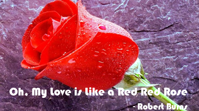 a red red rose paraphrase