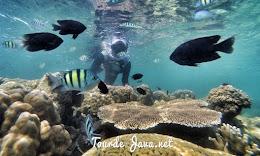 wisata bawah laut dalam paket opne trip harapan
