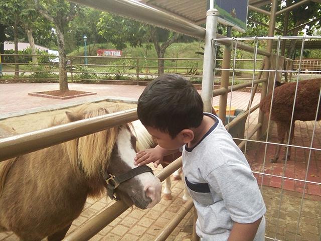 Taman Legenda TMII, pojok edukasi kuda poni