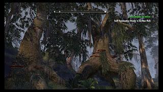Swamp wilderness in Shadowfen
