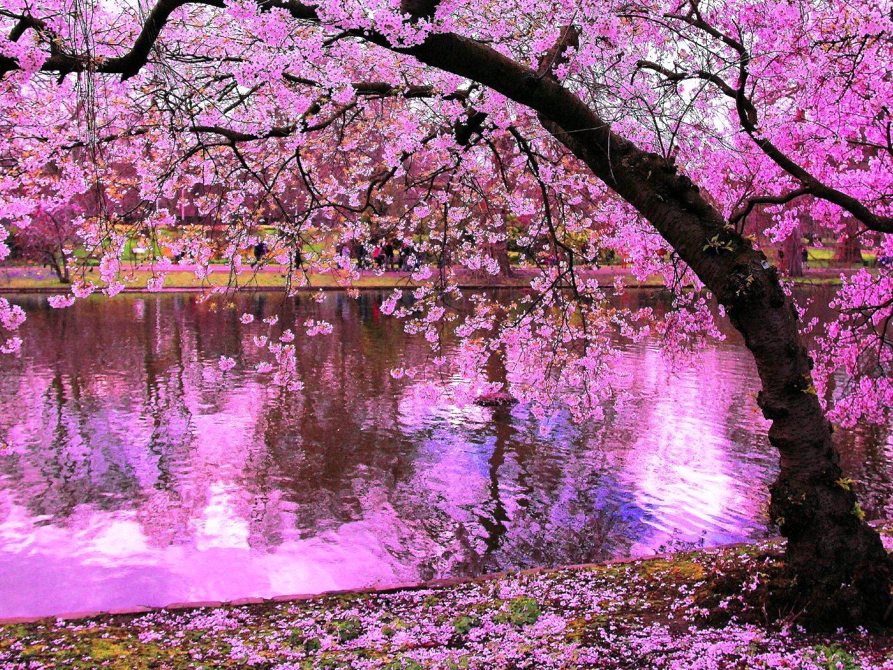 Desktop wallpaper hd nature pink