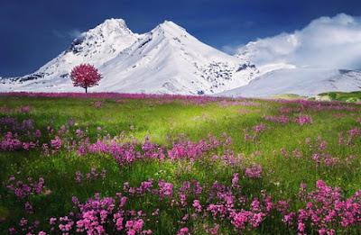 Pradera con flores rosas y montañas nevadas al fondo