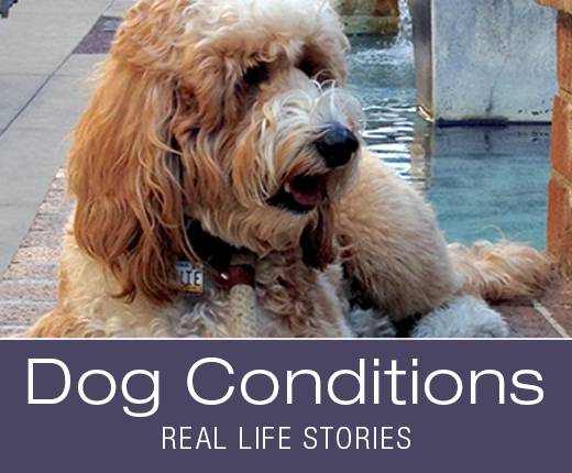 Dog Conditions - Nausea, Fatigue, and Anxiety: Bernie's Story