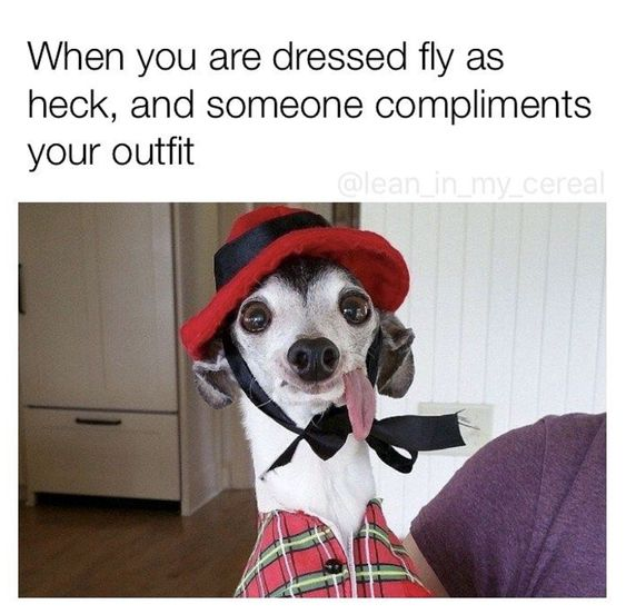 Funny dressed fly as heck dog meme picture