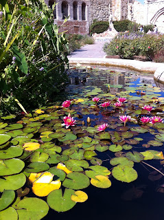 Lilly pond Mission San Juan Capistrano, Green lilly pads, pink flowers, float on pond