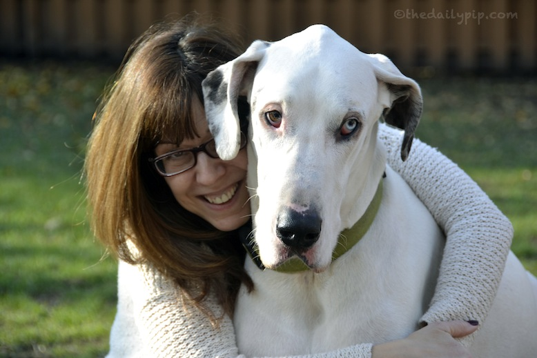 A rescued deaf great dane and his adopter encourage others to adopt deaf dogs