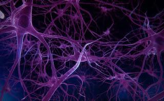 Meningkatkan kesehatan sistem saraf